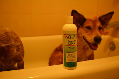 bathtub dog with medicated conditioner