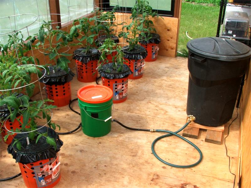 Wasilla Alaska Garden Adventures Alaska Grow Bucket Update