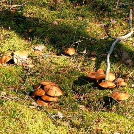 Мясо по французски рецепт фото с грибами и помидором