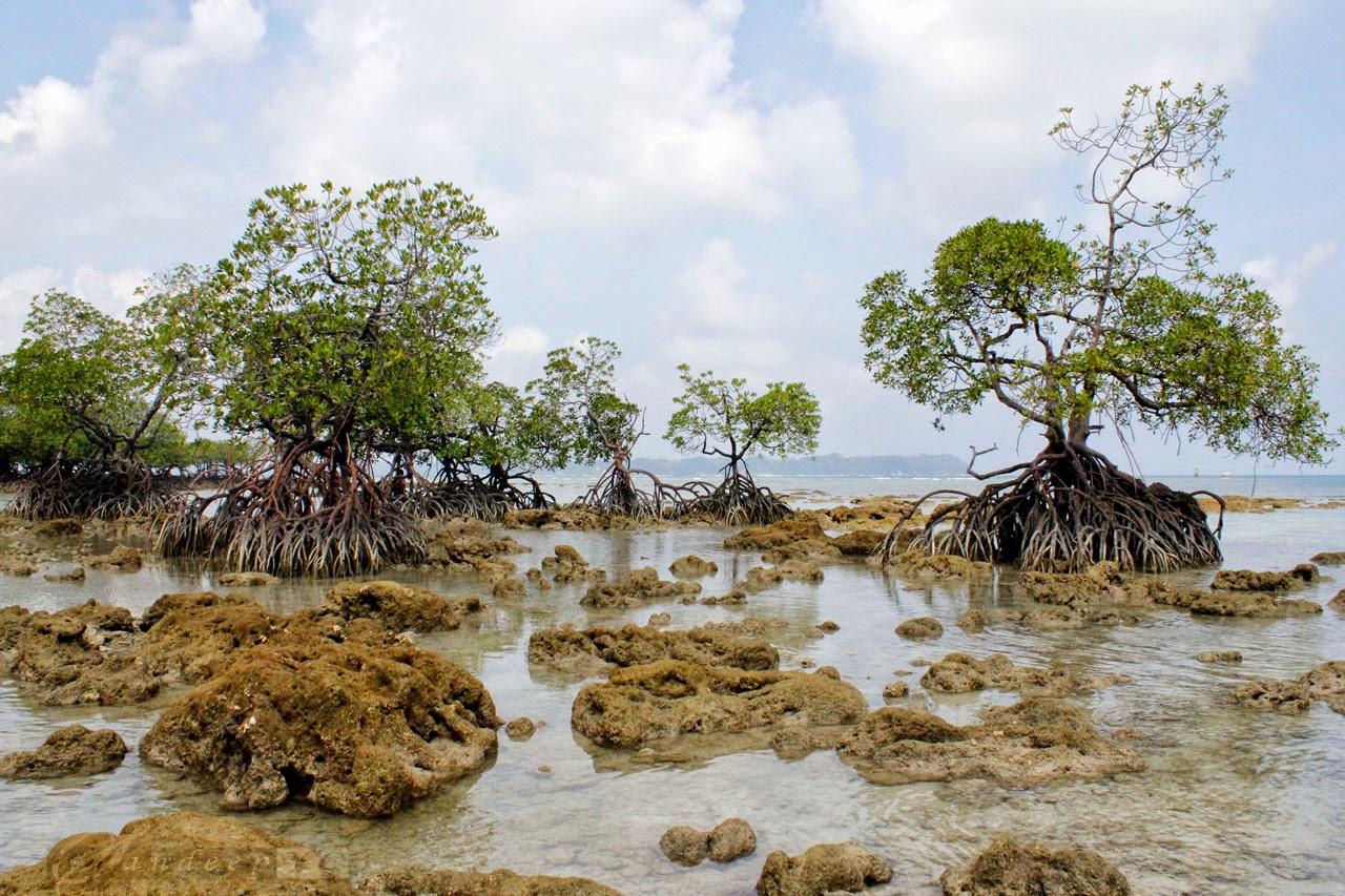 Mangrove creek at the Neil Island