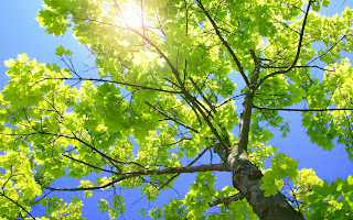 Sunny Tree Branches HD Wallpaper