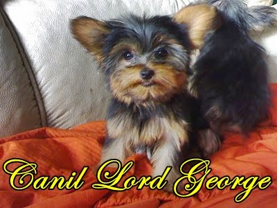 Canil Lord George