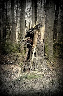 ułamane drzewo (Wzgórza Strzelińskie)