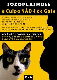 ESTÁ GRAVIDA? - o perigo NÃO está no gato.