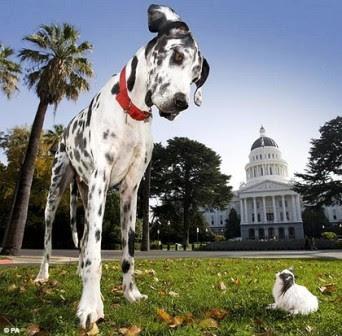El perro más grande y el más pequeño del Mundo.