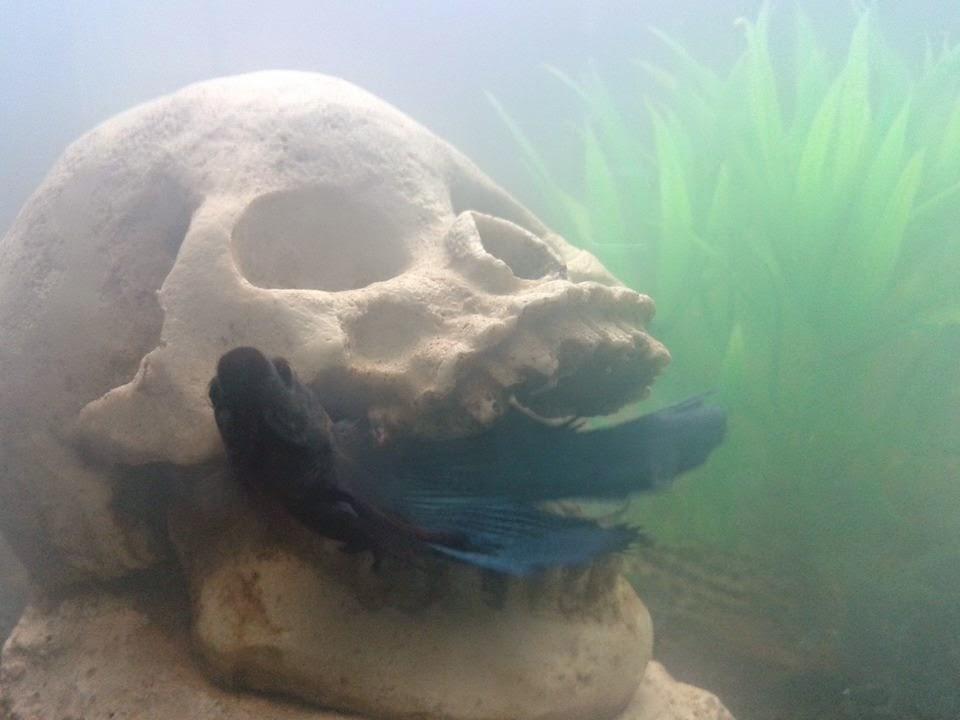 Stella noctis diary l 39 acquario maledetto for Comprare un acquario