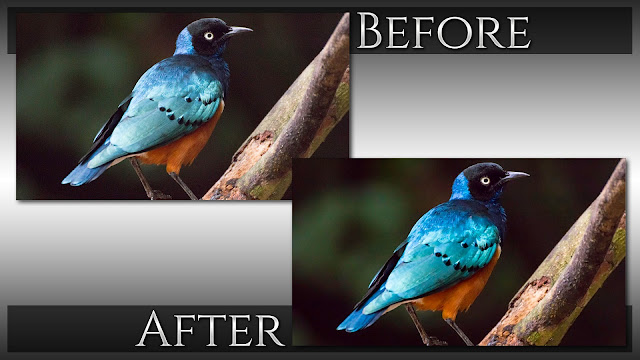 Reducing High ISO Noise | Noiseless Tutorial - Before & After