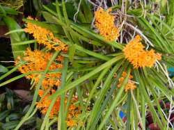 Anggrek langka yang dilindungi....!!!| http://indonesiatanahairku-indonesia.blogspot.com/