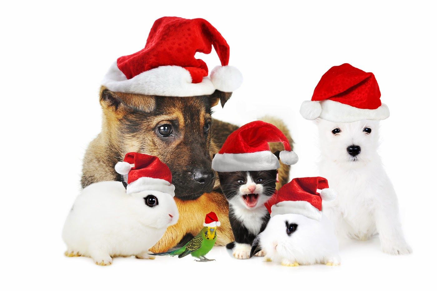 All new wallpaper my christmas gift for dog lovers