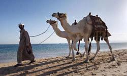 سحر الطبيعة فى مصر - محمية وادي الجمال الصحراء الشرقية المصرية