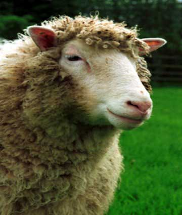 amazing-extinct-animals-resurrected-by-cloning-dolly-the-sheep