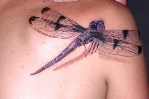 wish it was green blue tattoo pinterest dragonflies cool tattoos and purple. Black Bedroom Furniture Sets. Home Design Ideas