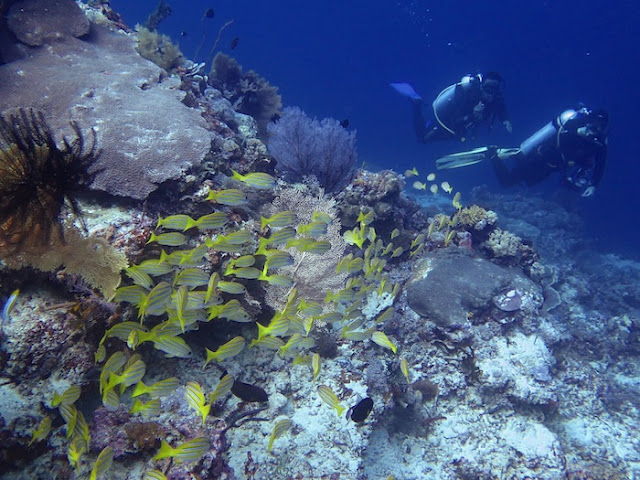 """<a href=""""http://mataram.info/things-to-do-in-bali/visitindonesia-banda-marine-life-the-paradise-of-diving-topographic-point-inward-fundamental-maluku/"""">Indonesia</a>best destinations : Channel Is Meliorate Than Chanel: Barracuda Storm, Maratua"""