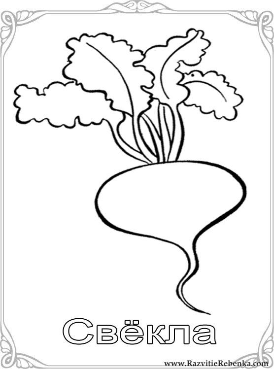 Картинки кабачок овощи