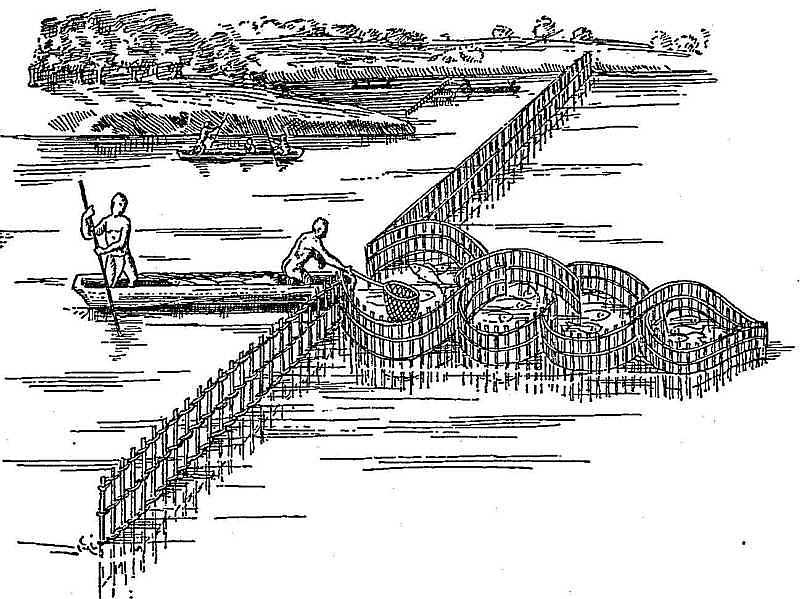 how to build a fish weir