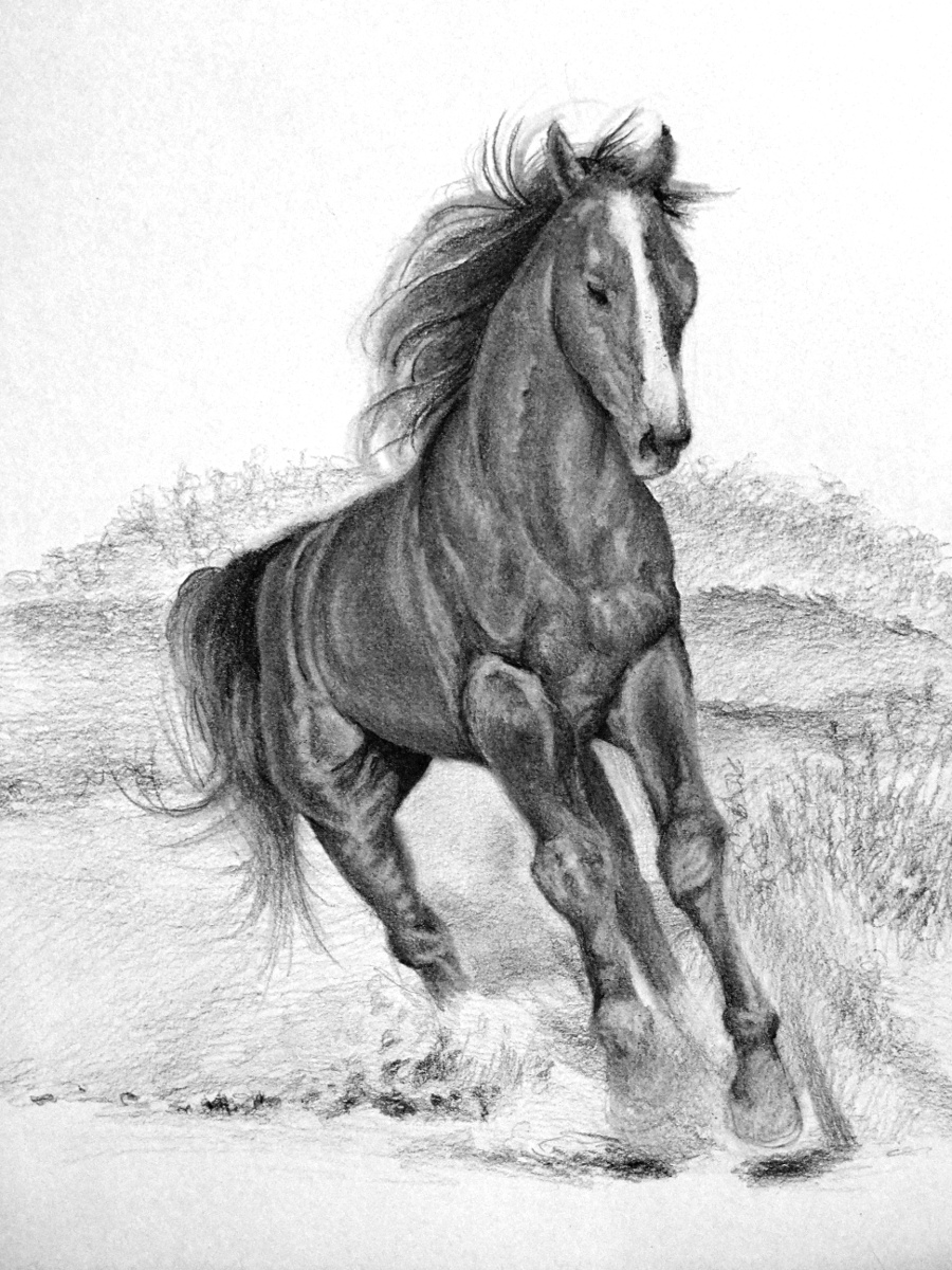 Horses drawings in pencil step by step - photo#27