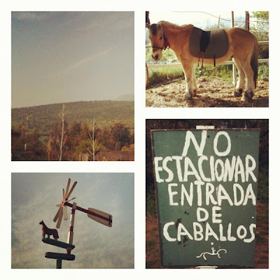 iPhoneography: October 5 2012 Selection, pablolarah,Pablo Lara H,weather vanehorse,no parking horse entrance,santiago de chile