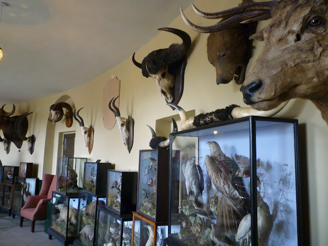 kedleston hall georgian interior neo-classical trophy corridor taxidermy via lovebirds vintage