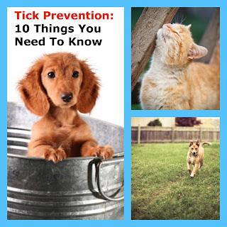 ticks, fleas, dogs
