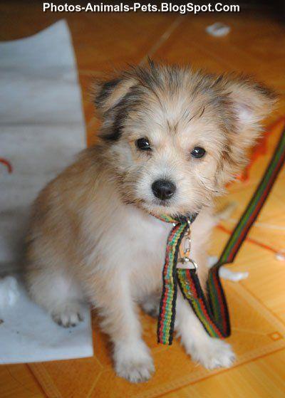 http://3.bp.blogspot.com/-mb-V4baIiQI/Tc68rU-lP5I/AAAAAAAABD8/VLNkWvBSPRA/s1600/Puppy%2Bcute%2Bruffled%2Bfeathers_0001.jpg