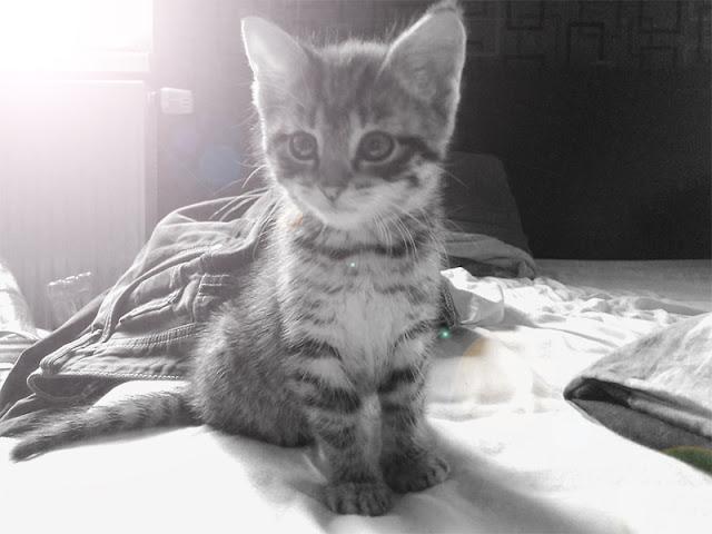 frauschoenert's cute babycat