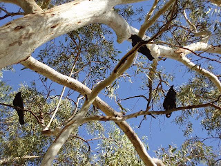 A Crow Family Story