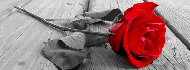 ảnh bìa facebook đẹp nhất hoa hồng