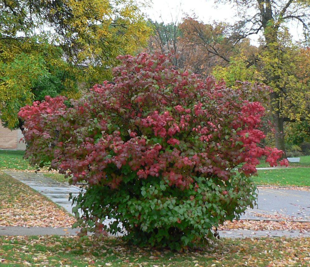 Visit my garden spring flowering shrubs - Blooming shrubs ...