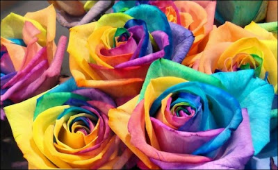 9 'قوس قزح' من أجمل الزهور التي قد تراها   حقن الزهور بصبغات مختلفة