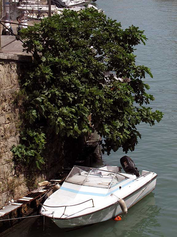 Boat under a tree, Fosso Reale, Livorno
