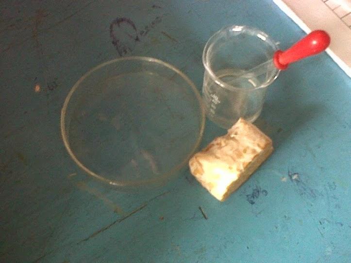 Kumpulan Materi Tugas Sekolah Dan Belajar Online Gratis Contoh Laporan Praktikum Biologi Jamur