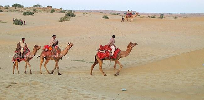 Camels at Jaisalmer Sam sand dunes