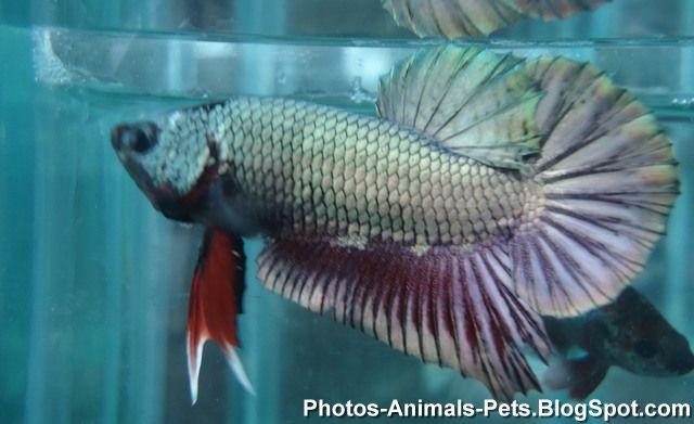 http://3.bp.blogspot.com/-mcEKjYvUqA0/TZs4OQt8aHI/AAAAAAAAAbE/ZtVRR6rr5Os/s1600/fish+images+_0021.jpg