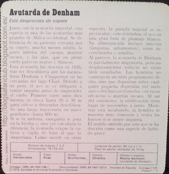 Blog Safari club, características de la Avutarda de Denham