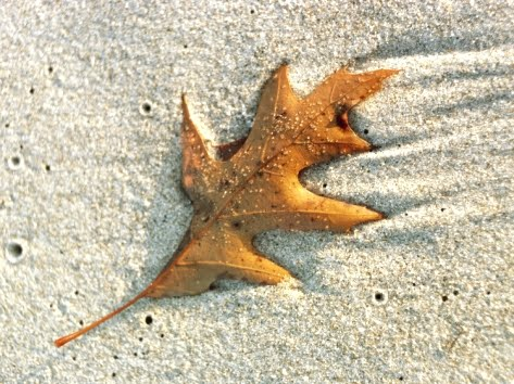 leaf on the beach photograph