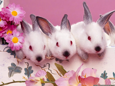 Cute Easter Wallpaper Cute bunnies easter wallpaper