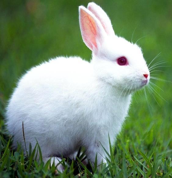 Conejo Net Worth
