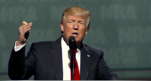 Injured ants get rescued after sending chemical SOS, researchers findVideo: Trump's Full Speech at NRA Convention in Atlanta 2017