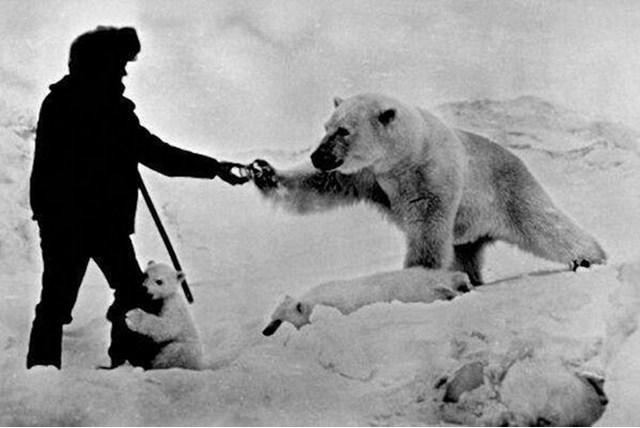 La increible historia del hombre que alimentaba osos polares
