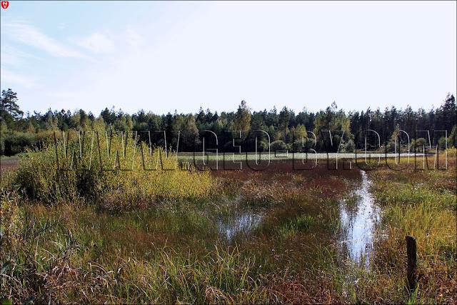 Налибокская пуща. Безымянное лесное озеро. Северный вид
