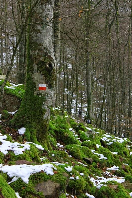 Balisage rouge et blanc dans la forêt