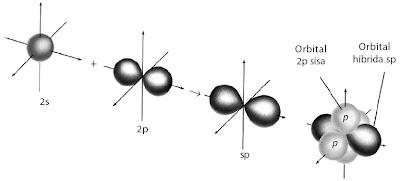 Pembentukan orbital hibrida sp