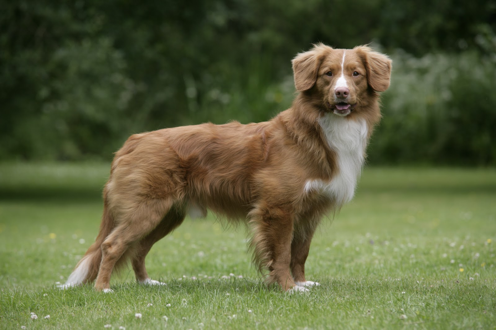 Toller Dog Grooming