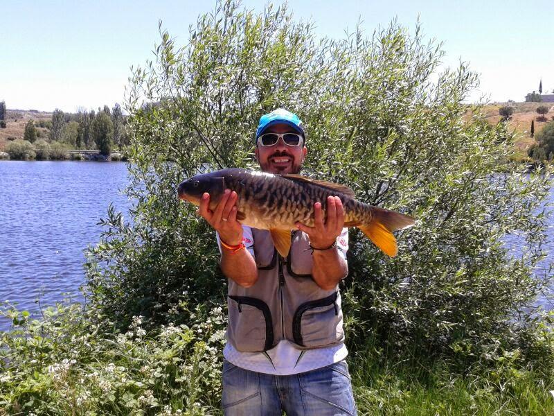 Clasificacion junio los enreda for Fuentes de agua con peces