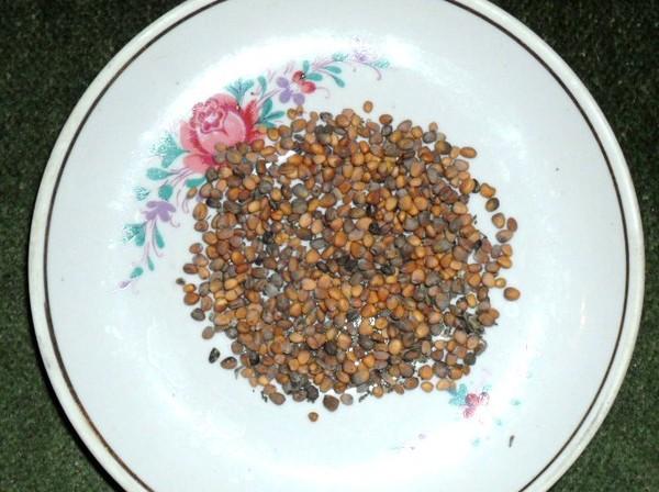 обработка семян арбузов и дынь перед посевом