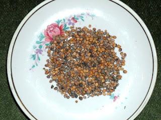 Семена редиски