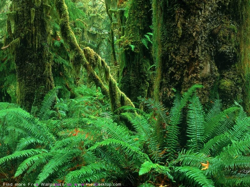 The amazon forest new and latest wallpapers all wallpapers for Amazon wallpaper