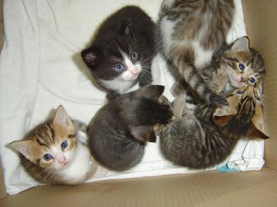6 kleine katten