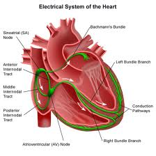 heart electrical system ekg
