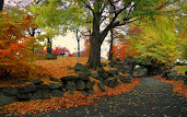#3 Autumn Wallpaper